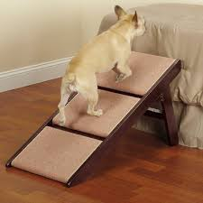 10 best dog steps and stairs in 2018