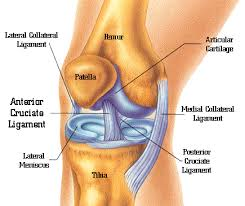 Lateral Patellar Ligament Patellar Chondral Causes Symptoms Prevent And Treatment Rayur