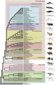 294 best evolution images on pinterest life science science