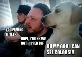 Stoned Dogs Meme - stoned