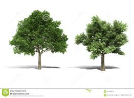 3d tree render on white background stock illustration image