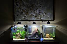 saltwater tank devons reef page using dishes to file up aquarium