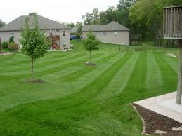 grizzly bear lawn care we know the art and science of your lawn