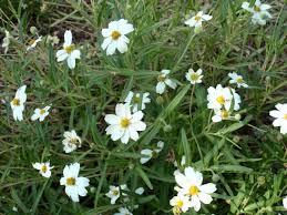 drought tolerant plants are beautiful summer bloomers u2026 diana u0027s