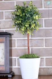 Lollipop Topiary Tree The 25 Best Topiary Trees Ideas On Pinterest Pine Cone Tree