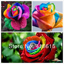 Different Color Roses Aliexpress Com Buy 300 Mystic Rainbow Rose Bush Flower Seeds 3