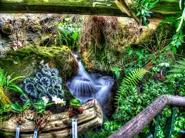 waterfall in cool house at singapore botanic gardens flickr