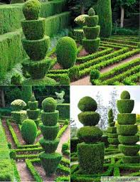 Evergreen Landscaping Ideas 25 And 30 New Topiary Ideas Great Decorative Plants To Beautify