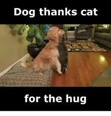 Cat Hug Meme - dog thanks cat for the hug cats meme on me me