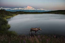 brilliant colors of denali national park alaska wallpapers top 8 national parks to instagram u s department of the interior