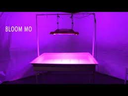 california led grow lights california light works solar storm 880w led grow light 2015 review