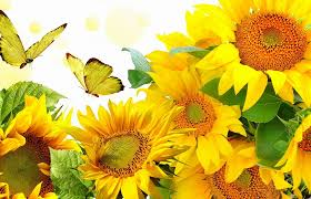creative butterflies lovely four glories flowers designs