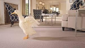 Cheap Laminate Flooring Edmonton Pet Protection U0026 Warranty Mohawk Carpet Is Great For Animal Lovers
