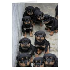 rottweiler cards rottweiler greeting cards rottweiler greetings