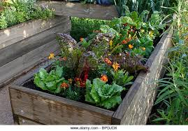 small vegetable gardens stock photos u0026 small vegetable gardens