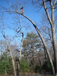 tree work in progess ri tree business silver leaf forestry