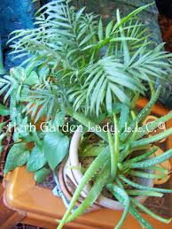 window herb harden window herb garden grow culinary and aromatic herbs all year