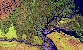human evolution is more a muddy delta than a branching tree aeon