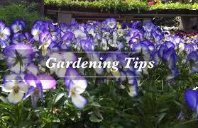 Garden Of Eden Craft - garden center san francisco ca house plants u0026 christmas trees