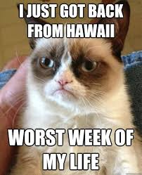Hawaii Memes - i just got back cat meme cat planet cat planet