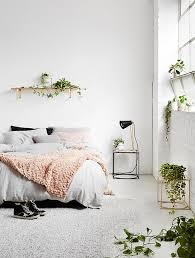 modern indoor succulent in bedroom