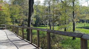 Canopy Roads Baptist Church Tallahassee by Why Make Tallahassee Your Home The Tallahassee Museum