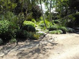 australian native screening plants landscape design melbourne sandra mcmahon gardenscape design