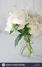 Peony Flowers White Peony Flowers With Green Leaves And Buds In Glass Jar On