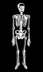 Printable Halloween Skeleton Crafty Project Skeleton Matchboxes Halloween The Graphics Fairy