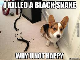 Funny Puppy Memes - 33 most funniest pet meme pictures and images