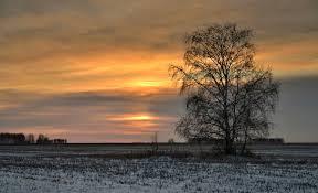 sunset amazing sunset clouds tree nature beautiful hd wallpapers