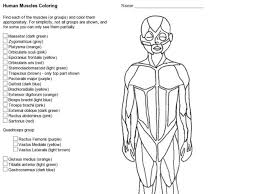 human muscles coloring 8th 10th grade worksheet lesson planet