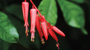 native south american plants french institute agrees to share patent benefits after biopiracy