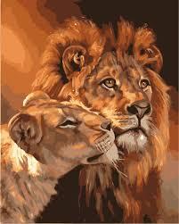 25 lion drawing ideas lion art lion