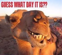 best 25 hump day camel ideas on camels wednesday