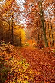 autumn trail bengt sigeholt autumn colorful explore fall