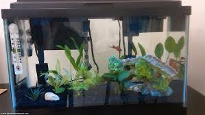 10 gallon planted tank led lighting gallon aquarium diy led light for 10g planted tank youtube gallon