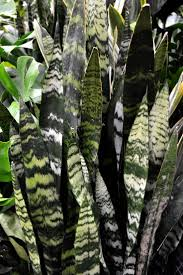 best 25 tropical house plants ideas on pinterest flowering