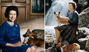 The Queens Corgis What Are The Queen U0027s Corgis Called All About Elizabeth Ii U0027s Dogs