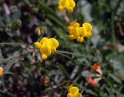 plants native to ohio field biology in southeastern ohio roadside plants that