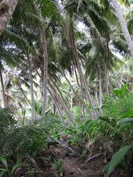 queensland native plants coconut palms shouldn u0027t be promoted as symbols of tropical