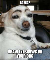 Memes Dog - bored drawn eyebrows on your dog memes com eyebrows meme on me me