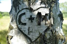 initials carved in tree c m wood carved tree free image peakpx