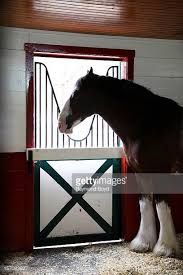 Budweiser Clydesdale Barn Budweiser Clydesdale Stock Photos And Pictures Getty Images