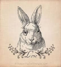 vintage rabbit rabbit illustration vintage search a colony of rabbits