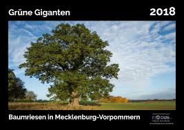 Kalender 2018 Mv Kriedemann Umweltshop Kalender 2018 Grüne Giganten Baumriesen