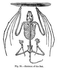 bat skeleton free vintage clip art halloween inspiration