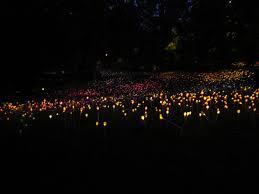 Cheekwood Botanical Garden Museum Of Art Amanda Plante U0027s Garden Guide Light Up The Night At Cheekwood