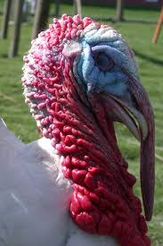 turkey up turkey2 jpg