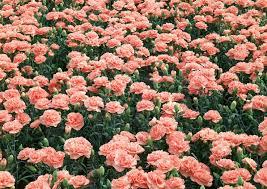 Image Flower Garden by The Flower Clocks Flower Clock Bed Garden Plants
